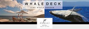 Oubaai-Whale-Season-Design2-Big picture